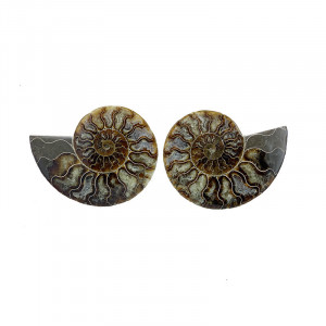 Ammonite sciée et polie (Madagascar)