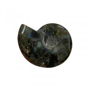 Labradorite forme ammonite