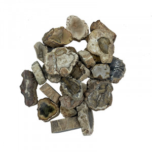 Bois fossile - Madagascar- Sachet 1 kg