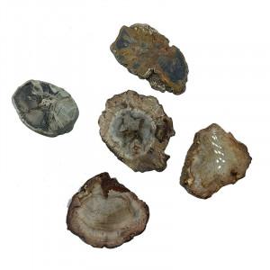 Bois fossile petites tranches Madagascar