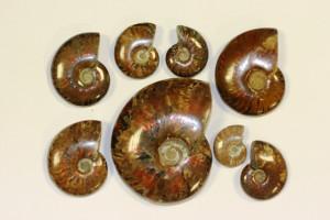 Ammonite polie nacrée et opalescente - sachet env. 250 grs - Madagascar